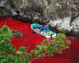 Slaughtered Dolphins - Japan